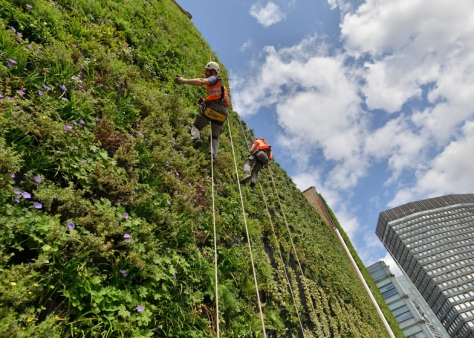 Embargoed until Wednesday 21 August, 00.01 Living wall photo cap